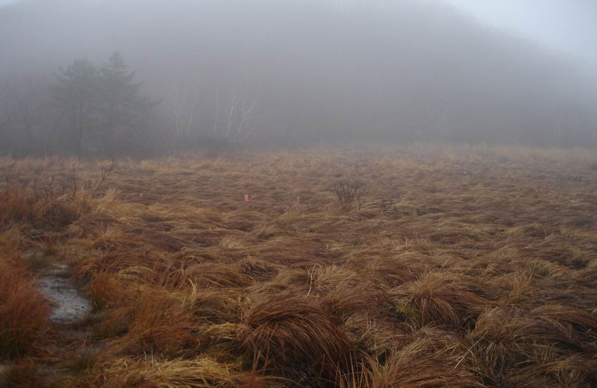 Peat bogs are a big source of dissolved organic carbon that can leak into drinking water and change aquatic ecosystems.