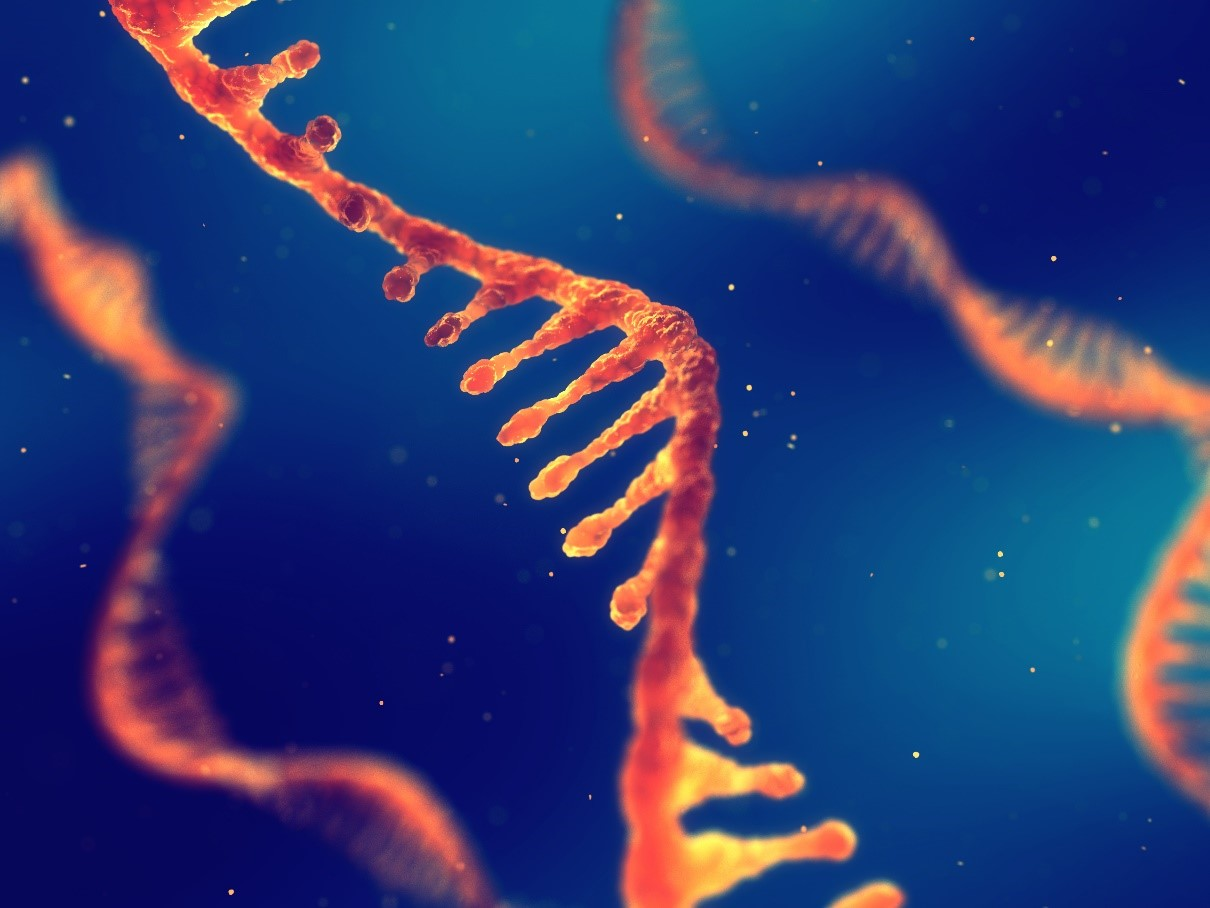 "RNA helps encode functional proteins, thus ""guiding"" overall cell function."